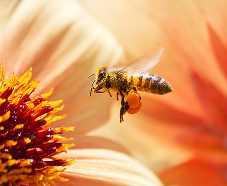 Outreach Buddy Bee